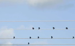 Small flock of birds sitting perched on overhead cables against a blue sky. Having a difficult conversation, help and advoce from Claire Hirst at spinmyplates.com