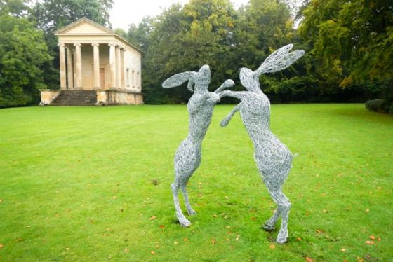 hares on the terrace