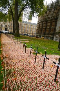 poppies on little crosses outside of Westminster Abbey