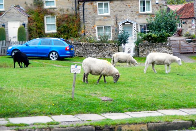 sheep in town (Hutton-le-hole)