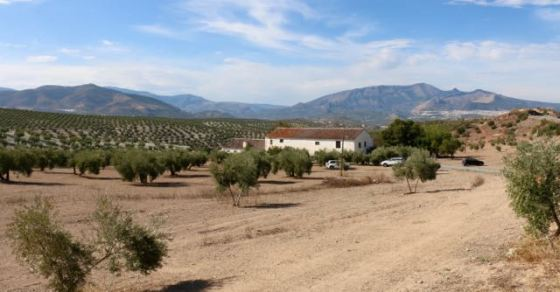 olive country in Andalucía