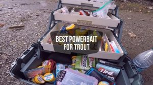 Best Powerbait For Stocked Trout