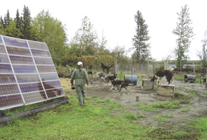 Picture of the solar panels and the mushing dogs at the Alaskan roadhouse