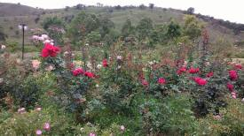 as-rosas-do-retiro