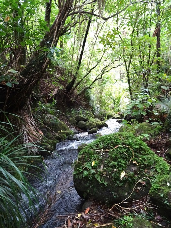 Walks in the Waitakere bring you to beautiful spots like this