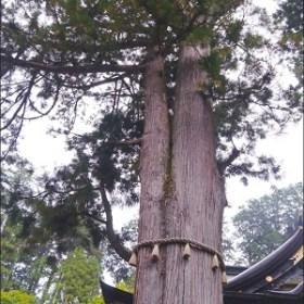 縁結びの木(三峯神社)