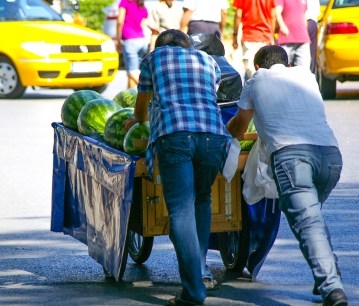 melons-to-market