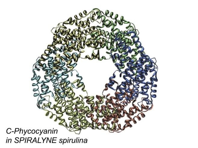 C-Phycocyanin in Spiralyne spirulina