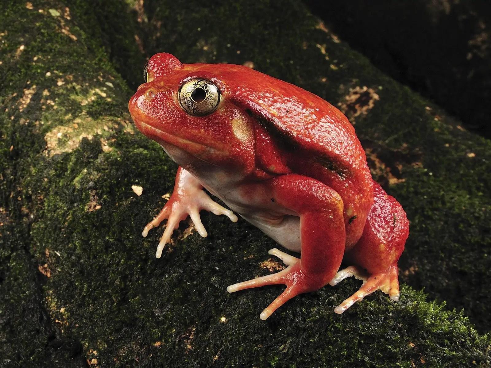 Reptiles And Amphibians Spirit Animal Totems