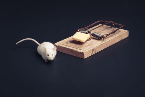Temptation, mouse near a mousetrap