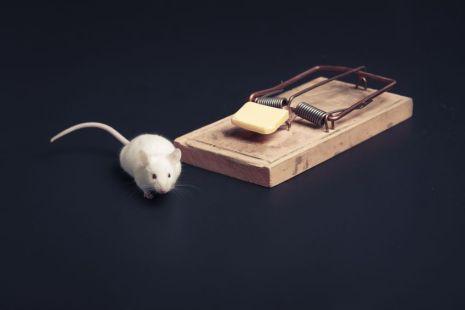 Temptation, mouse near a mousetrap