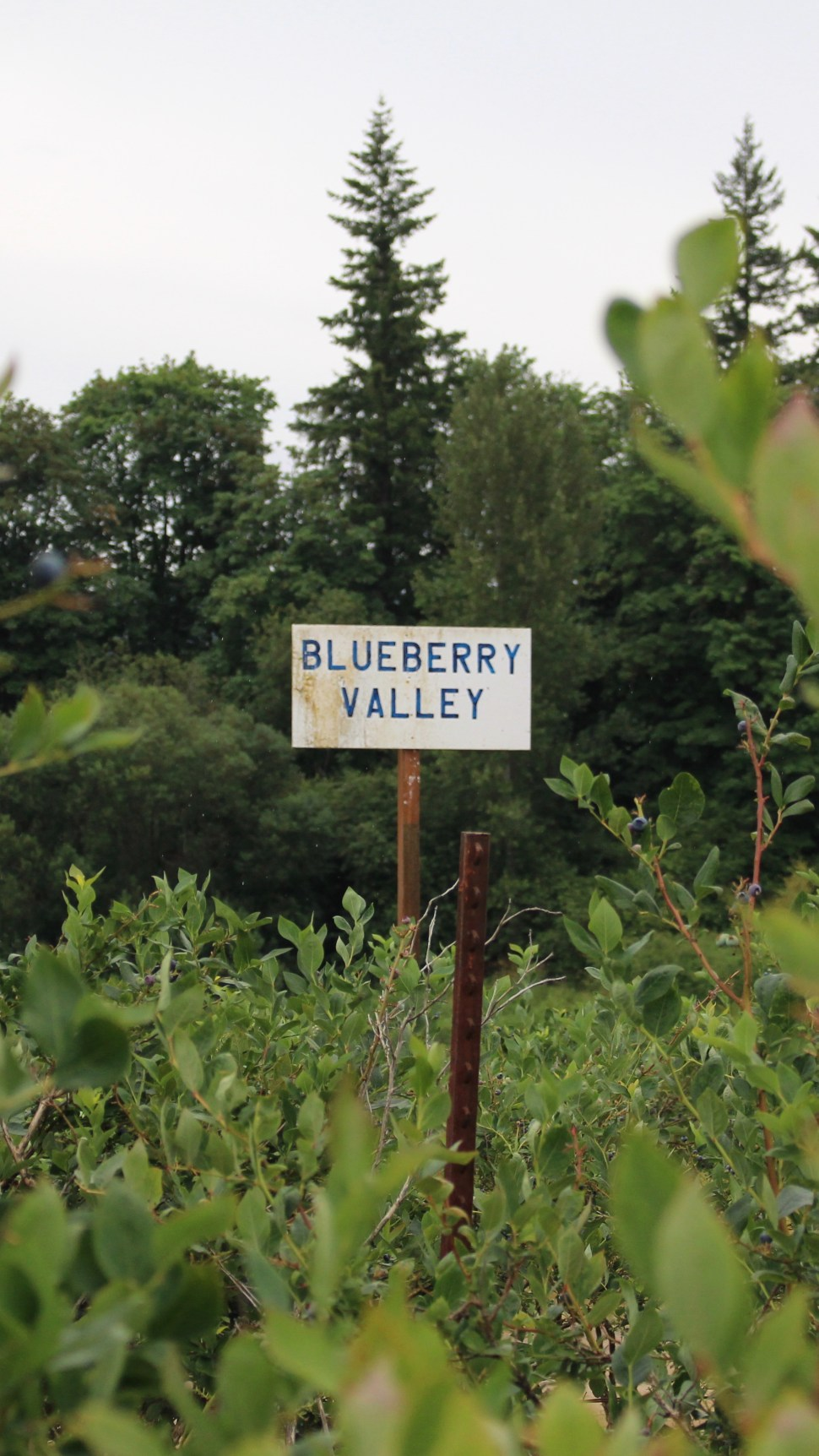 Rowell Brothers Blueberry Farm