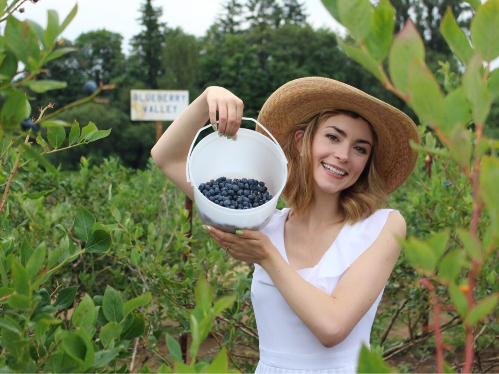 Blueberry picking in Oregon.