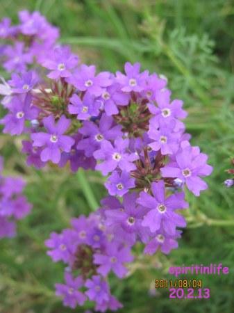 delhi park photos 688