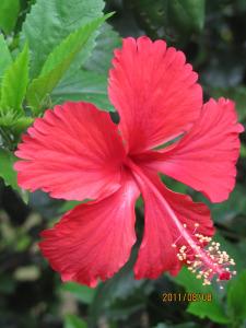 banyan-tree-ashram-0461