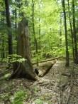 Hartwick Pines, Michigan