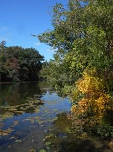 Autumn arrives at Newburgh Lake, Michigan