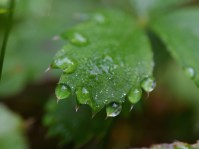 Jewels of morning dew