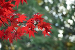 Vibrant reds of fall