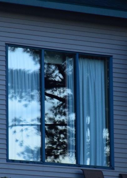 Tree on hotel window