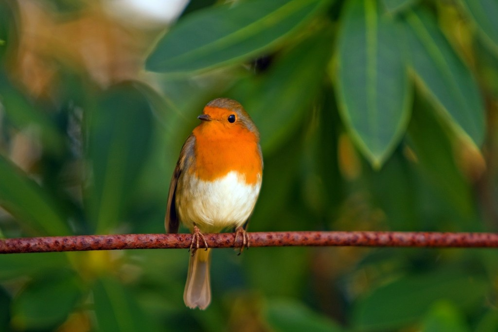 the spiritual meaning of robins
