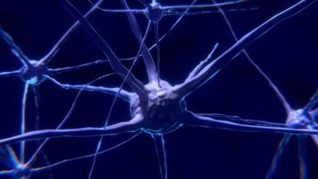 神経細胞 ニューロン 脳 神経系 シナプス