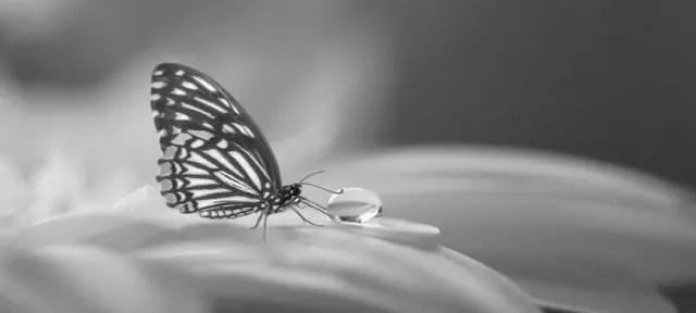 夢に蝶々が出て来た方へのスピリチュアルメッセージ