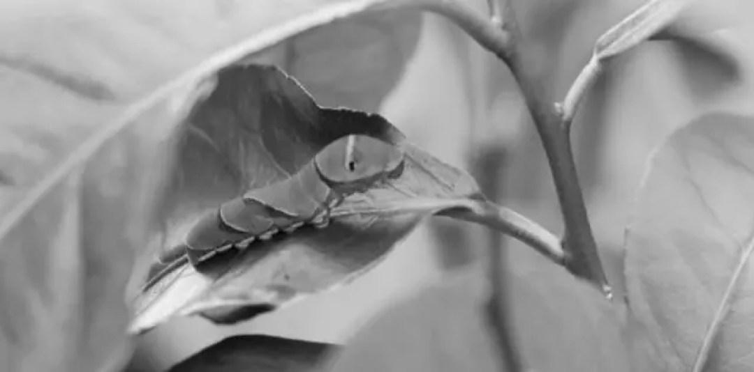 蝶の卵や青虫が出てくる夢の意味