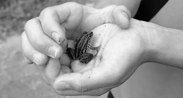 手の中のカエル