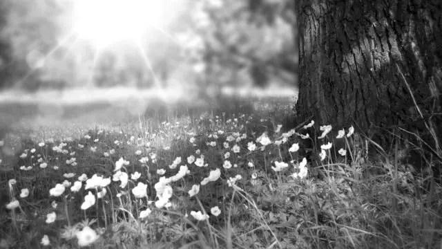 春の森林 光 希望