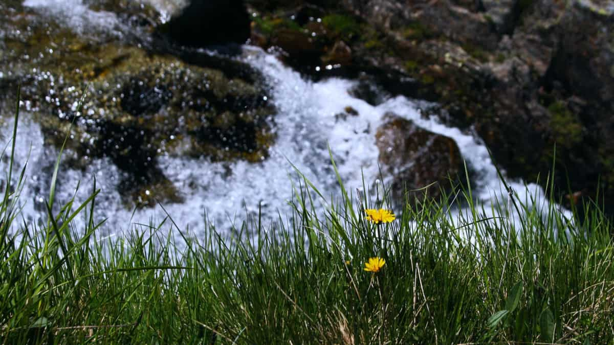 Mountain stream in a meadow