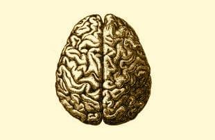 BrainCerebroHumano