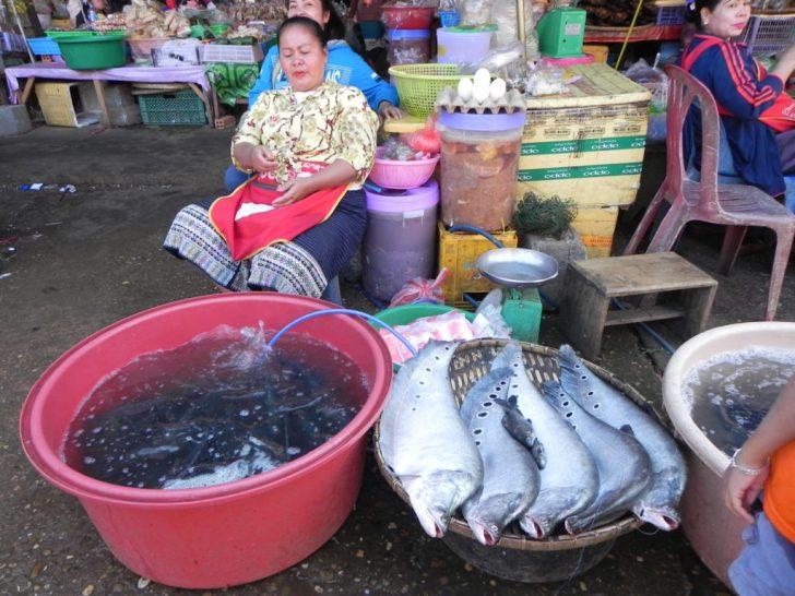メコン川捕れる魚