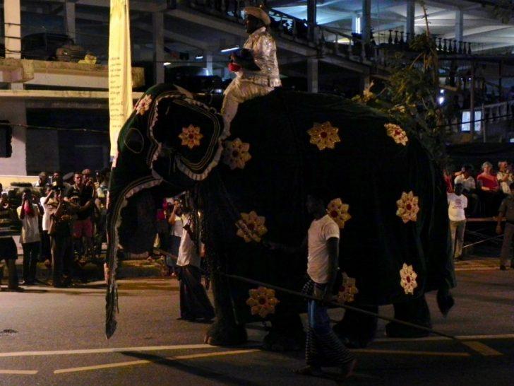 ペラヘラ祭り3 象さん