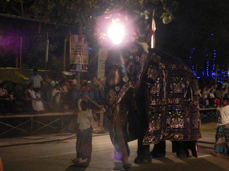 ペラヘラ祭り5 象さん
