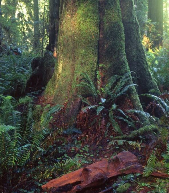 Photo of Large Tree in Forest with Green Moss on it