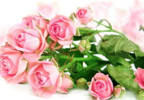 Το ροζ σχετίζεται με τα συναισθήματα της αγάπης και ευγνωμοσύνης.
