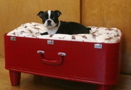 Μια παλιά βαλίτσα θα σας βοηθήσει να φτιάξετε ένα ονειρικό κρεβατάκι σκύλου
