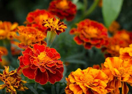 thehomeissue_(plants)04