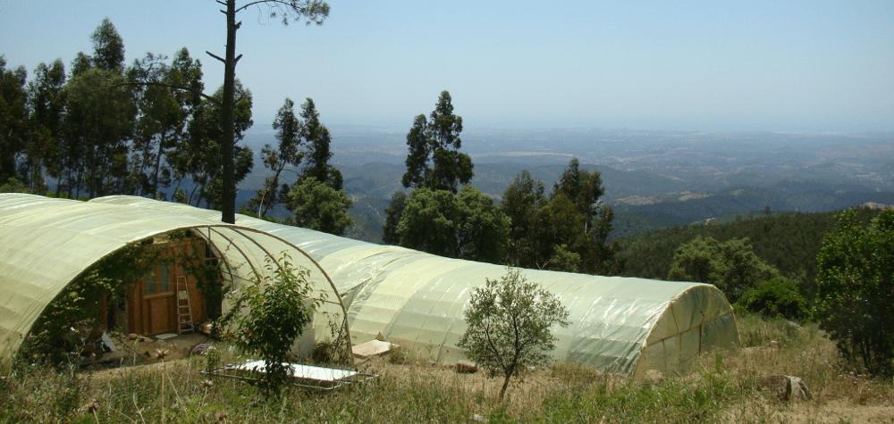 spirulina da serra - artesanal spirulina