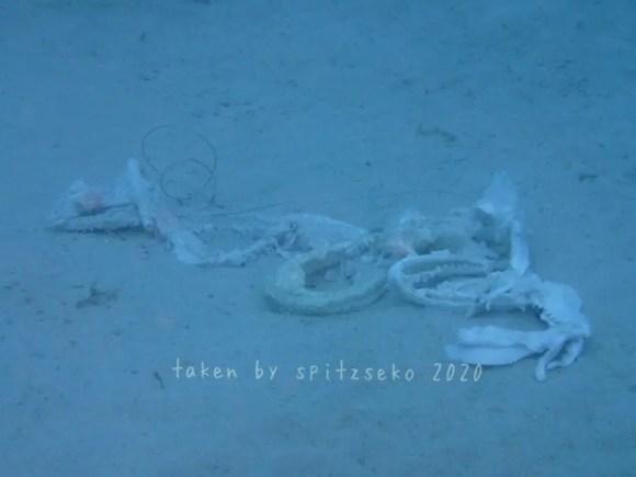 サメの残骸