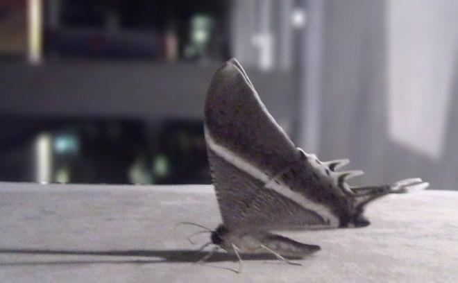 big-moth-blur