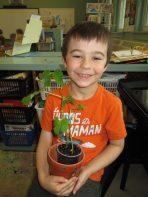 malik plant