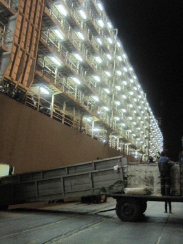 Live Animal Export: Australian horse transportation by sea for slaughter
