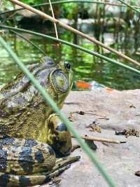 Eco-friendly Pond design