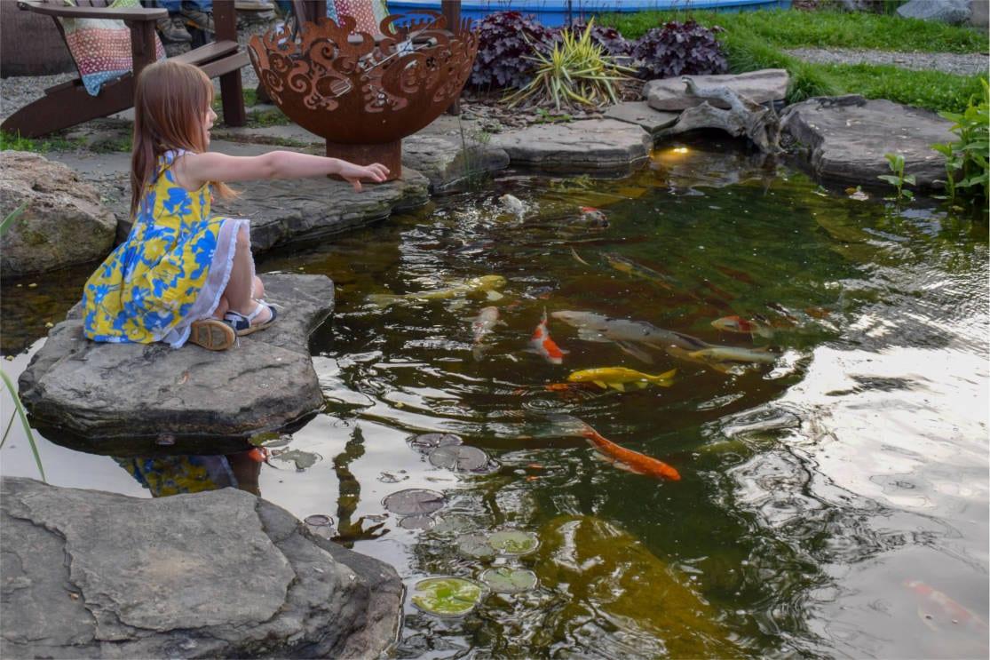 Are Koi And Goldfish Ponds Hard To Maintain Splash Supply Company