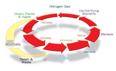nitrogen cycle low-res