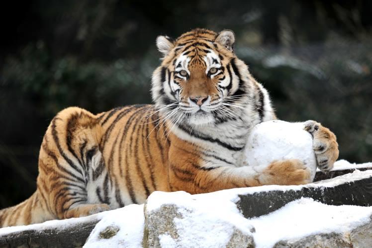 zoo servion hiver