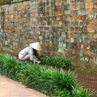 gardens of Hanoi..