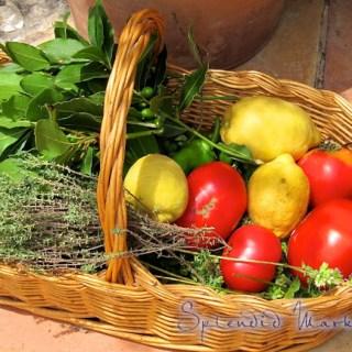 Tomato Coulis….